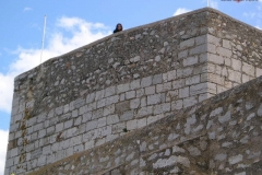 Vanilla, Saffron Imports Luna Pope Castle Valencia 2003 640