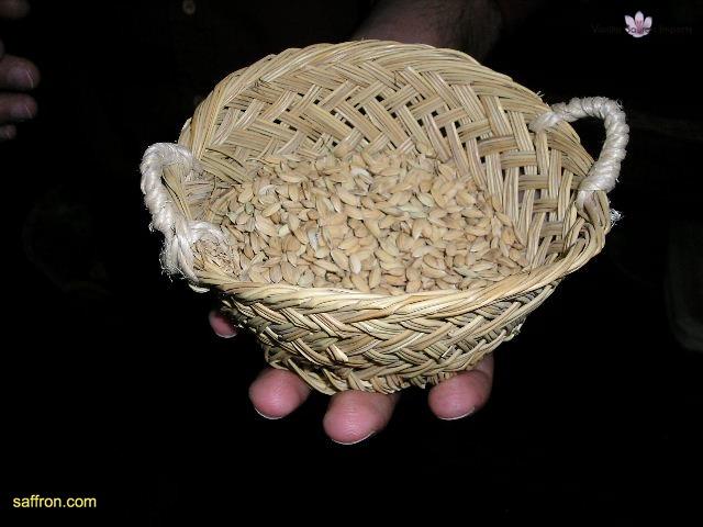 Vanilla, Saffron Imports Rice Museum Valencia 2003 598