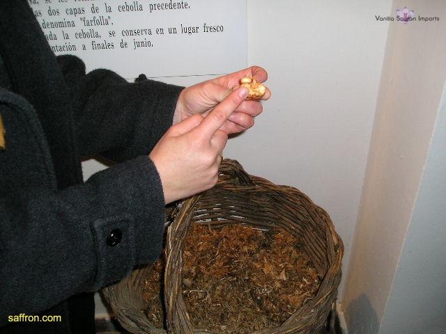 Vanilla, Saffron Imports Museo del Azafran, Monreal del Campo Teruel Spain 2004 693