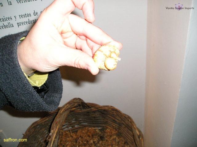 Vanilla, Saffron Imports Museo del Azafran, Monreal del Campo Teruel Spain 2004 694