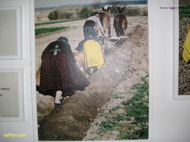Vanilla, Saffron Imports Museo del Azafran, Monreal del Campo Teruel Spain 2004 710