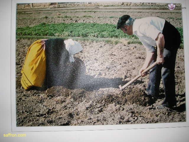 Vanilla, Saffron Imports Museo del Azafran, Monreal del Campo Teruel Spain 2004 711