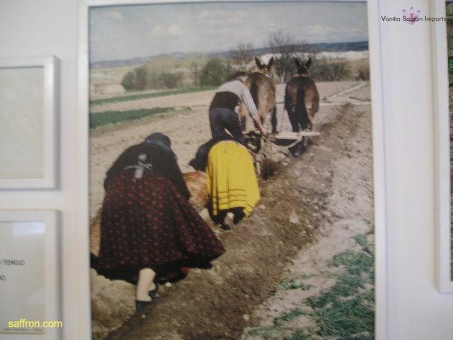 Vanilla, Saffron Imports Museo del Azafran, Monreal del Campo Teruel Spain 2004 714