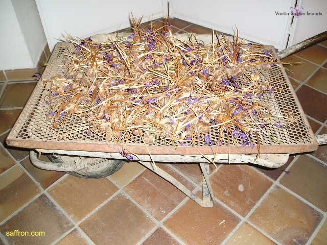 Vanilla, Saffron Imports Museo del Azafran, Monreal del Campo Teruel Spain 2004 767