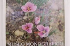 Vanilla, Saffron Imports Museo del Azafran, Monreal del Campo Teruel Spain 2004 677